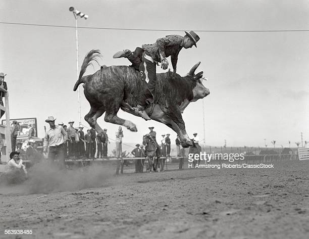 1950s RODEO BULL RIDING...