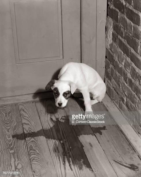 1950s SAD DOG IN CORNER...