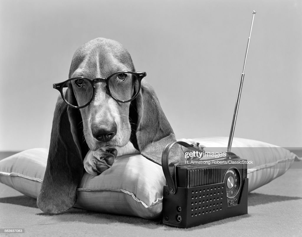 1960s Basset Hound Stock Photo | Getty Images