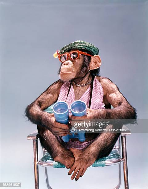 1960s CHIMPANZEE WITH BINOCULARS STRAW HAT SUNGLASSES SITTING IN FOLDING ALUMINUM LAWN CHAIR