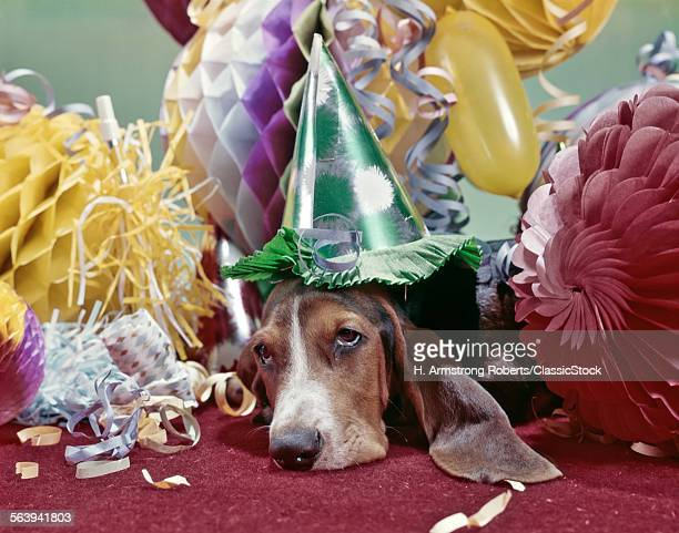 1960s EXHAUSTED BASSET HOUND WITH SAD EYES WEARING PARTY HAT LYING UNDER PILE OFPARTY DECORATIONS