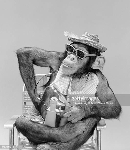 1960s MONKEY CHIMPANZEE WEARING HAT SUNGLASSES BINOCULARS SITTING IN BEACH CHAIR