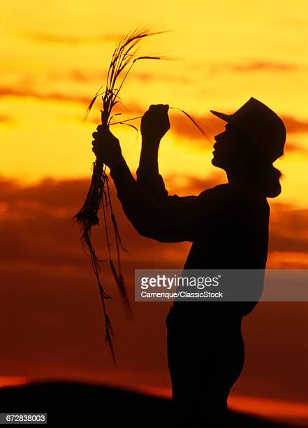 1960s SILHOUETTED ANONYMOUS YOUNG MAN FARMER INSPECTING WHEAT AGAINST RED AND YELLOW SUNSET CLOUDS
