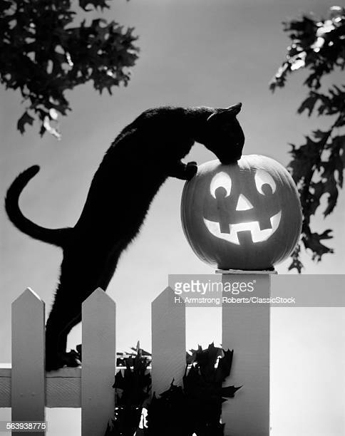 1970s BLACK CAT AND JACK-O'...