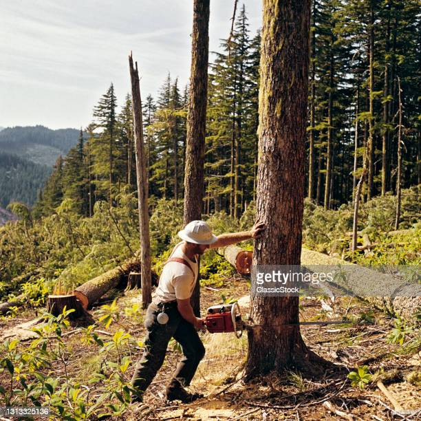 1970s Man Lumberjack Cutting Tree Mount Hood National Forest Oregon USA.