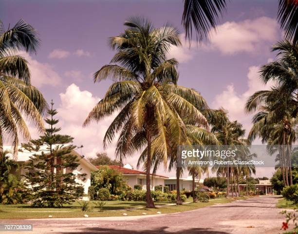 1970s PALM TREES AND...