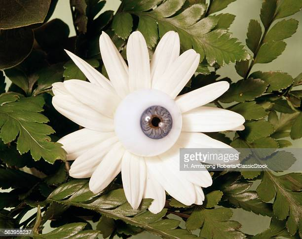 1970s WHITE FLOWER DAISY...