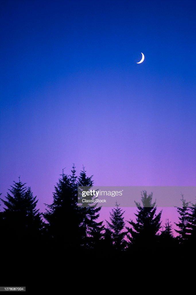 Crescent Moon Over Pine Trees : News Photo