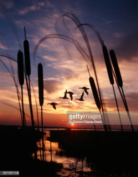 1980s SILHOUETTED DUCKS...