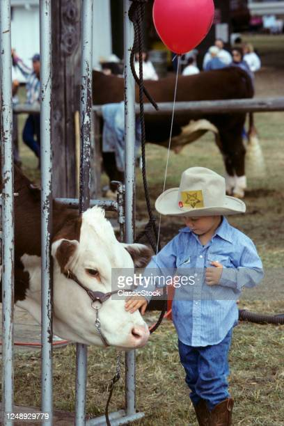 1990s Curious Young Boy At County Fair Wearing Cowboy Hat Holding Red Balloon Touching Face Of Polled Hereford Cattle