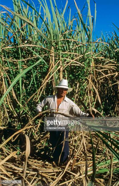 1990s MAN HARVESTING SUGAR CANE STANDING LOOKING AT CAMERA EVERGLADES FLORIDA USA