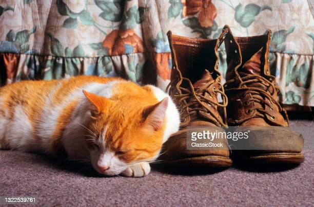 1990s Orange And White Cat Curled Up Head On Paw Sleeping Beside Pair Of Worn Dirty Work Boots .