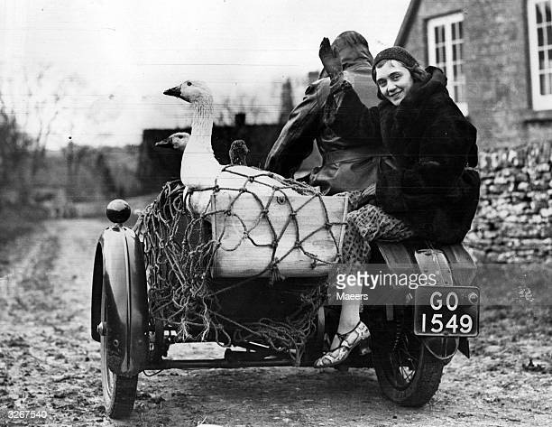 Geese set off on their last ride near Cheltenham It is anything but a 'joy ride' for them for they are off to market and their final destination is...