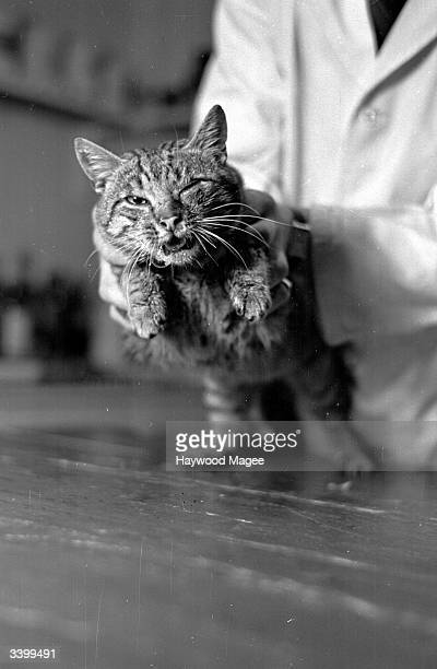 Tibbles displaying the typical symptoms of feline flu mucus pouring from the eyes and nose listlessness sneezing and bad breath Original Publication...