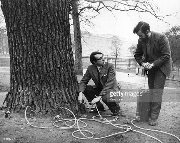 Dr John Giggs a research pathologist for the Forestry Commission and Jim Dickinson pumping fungicide into a 'guinea pig' elm tree in St James' Park...
