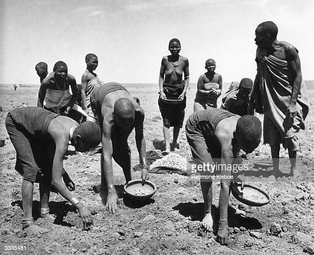 Labourers handpicking groundnuts in the Kongwa region of Tanganyika after combines managed to recover only 50% mechanically Original Publication...