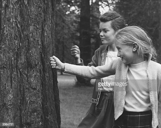 Two young visitors to Kew Gardens London trying out their punch on the trunk of a tree Fortunately the tree is a Pinaceae Sequdiadendron Giganteum...