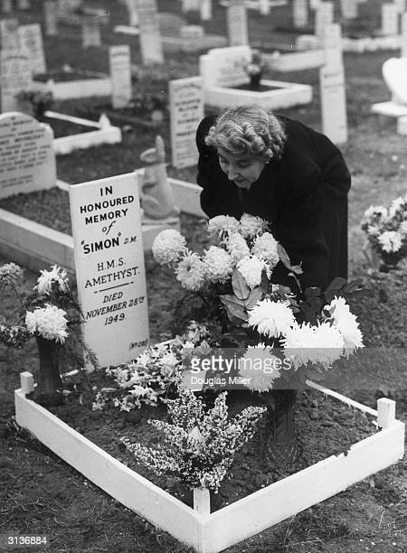 Mrs G D Macrow in charge of the PDSA burials at Woodford placing flowers on the grave of 'Simon' the cat on HMS Amethyst buried at Posa Santiorium...