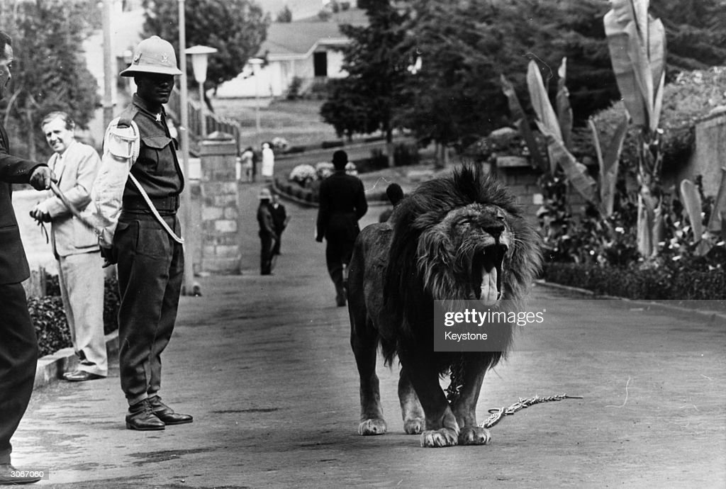 'Tojo' the lion guards the Jubilee Palace in Addis Ababa ...