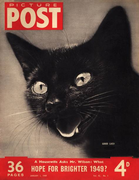 In Focus Black Cat Appreciation Day Photos And Images Getty Images