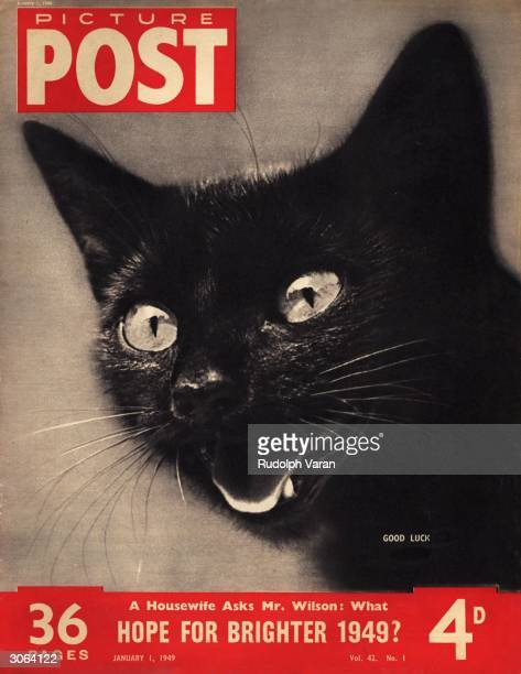 A mewing black kitten symbol of good luck to some and bad luck to others The headline beneath reads 'A Housewife Asks Mr Wilson What Hope for...