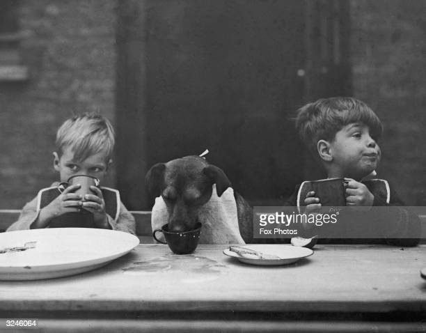 Prince the canine mascot of the Leytonstone Children's Home shows off his good table manners to his young friends He was a gift to the home from the...