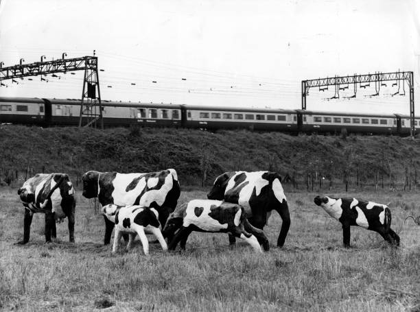 A group of cows made from concrete and scrap standing...