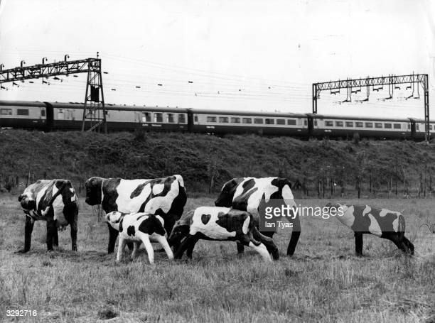 A group of cows made from concrete and scrap standing in a field by a railway track created by artist Liz Ley as a gift to the Milton Keynes...