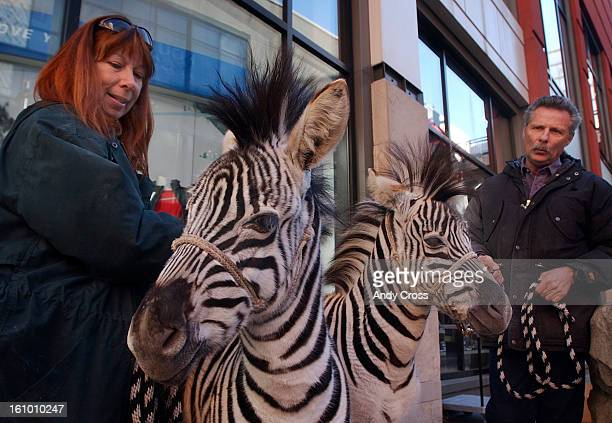 CODECEMBER 16TH 2004Animal trainers Bobbi <cq> Edrington left and Steve <cq> Martin <cq> <cq> right hold on to two Zebras Ace left and Stripes right...