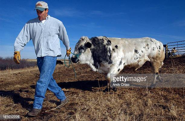 Craig Phillips and his Belgian Blue Bull National Grand Champion Masquerade 3yearsold on his ranch Phillips Pharms in Parker Saturday afternoon THE...
