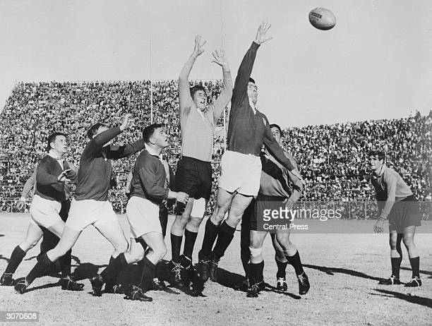 Northern Transvaal lock forward Stompie van der Merwe and British Lions' hooker Bryn Meredith leap high during a lineout