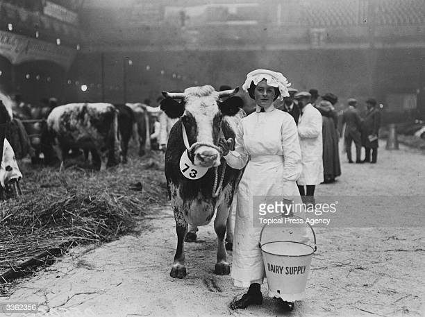 A dairy maid with her cow and a bucket during the Dairy Show at the Agricultural Hall