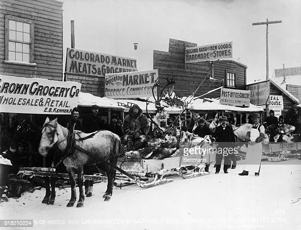 Delivery of sled full of moose and cariboo