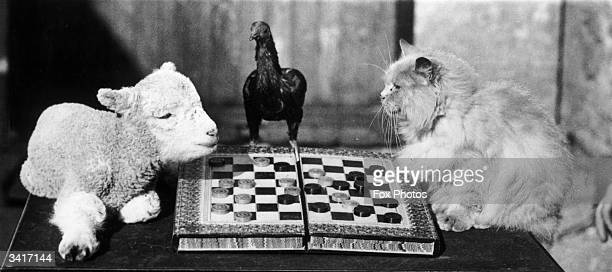 A lamb and a cat playing draughts watched over by a bantam at Langford Somerset