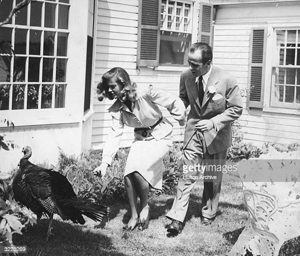 American actors Humphrey Bogart and Lauren Bacall chase a turkey outside a house on the day of their wedding, Malabar Farm, Mansfield, Ohio. Bogart...