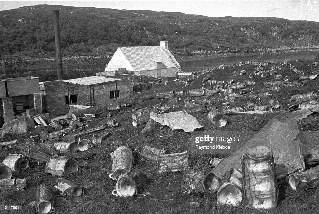 Shark's Cemetery : News Photo