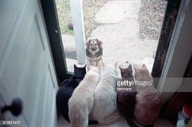 2/29/1988New Orleans LA There appears to be no room at the Inn for this stray dog who appeared at the photographer's back door recently as a brace of...