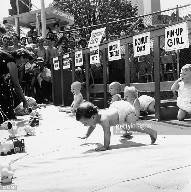 An infant crawls toward a toy train held by a parent as other babies remain at the starting gate during the Baby Crawling Race at Palisades Amusement...