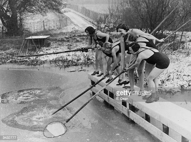 Regulars of the women's pond at Kenwood on Hampstead Heath, London are underterred by the ice.