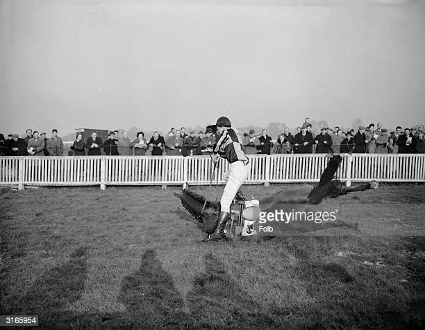 Jockey, R McReary takes a fall from Rose's Pact during the Corinthian Handicap Steeplechase at Kempton Park. Both recovered and went on to win the...