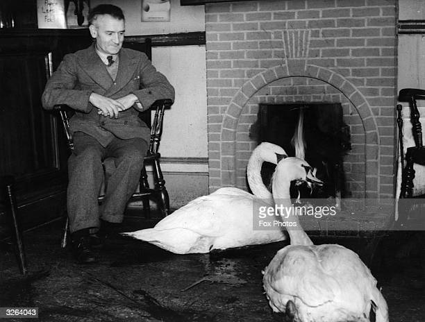 A bemused regular of the Caerlson Social Club watches two swans who make regular visits for drink and to warm themselves by the fire