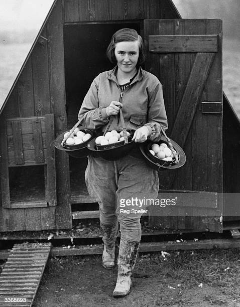 A worker on a poultry farm in Kent carrying eggs from a chicken coop using steel helmets