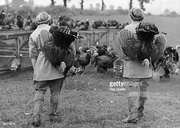 Land girls on an Essex turkey farm round up the turkeys for the last time These turkeys are bound for a London market and then Christmas Dinner
