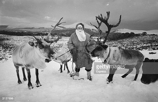 Mikel Utsi of Lapland dressed as Santa Claus and with the reindeer and sleigh that he uses to deliver presents to children in Aviemore Scotland