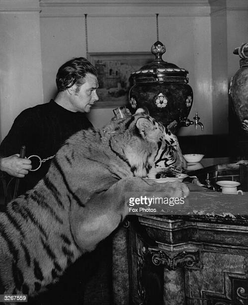 Out with his trainer Alexander Kerr for afternoon tea at the Cheltenham Pump Room Nizam the tiger laps the bowl of milk provided for him