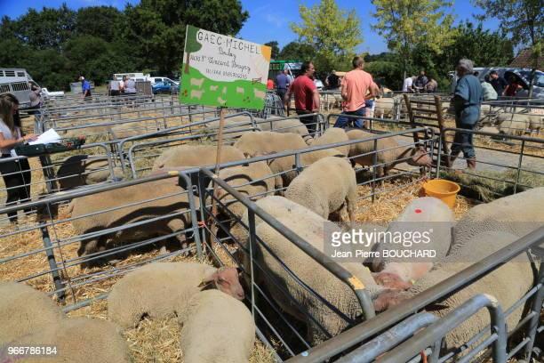 24ème foire aux béliers de BussièrePoitevine réunissant près de 400 bêtes rendezvous immanquable pour les professionnels de lovin avec des vendeurs...