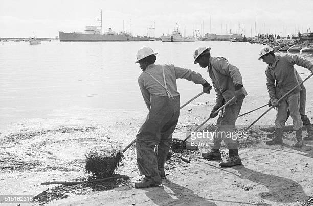 2/5/69Santa Barbara California Prisoners called in from forest conservation camps rake oilsoaked hay aong the surf line of Santa Barbara harbor Feb...