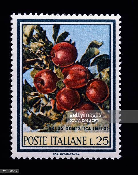 25lire postage stamp from the Flora series 2nd issue gravure printing Italy 20th century Italy