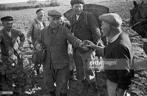 Farm workers treat themselves to a wellearned glass of Cognac on a Charente vineyard France Original Publication Picture Post 4702 Spirit Of...