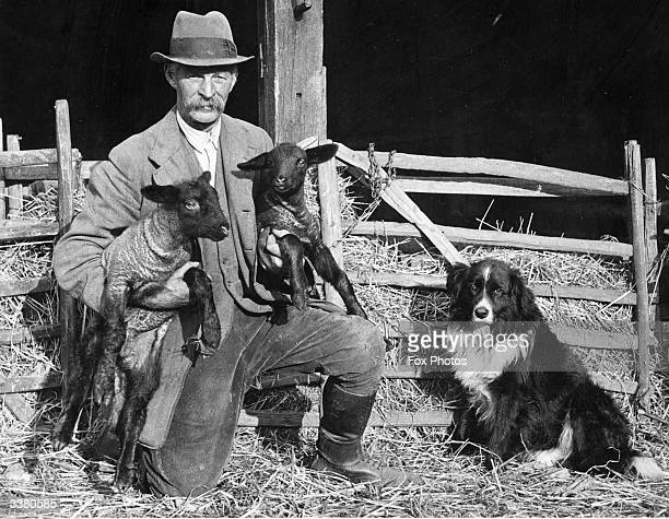 Mr H Clarke a shepherd at Sladburys Farm near Clacton Essex holds two lambs watched by his sheepdog five year old Jock